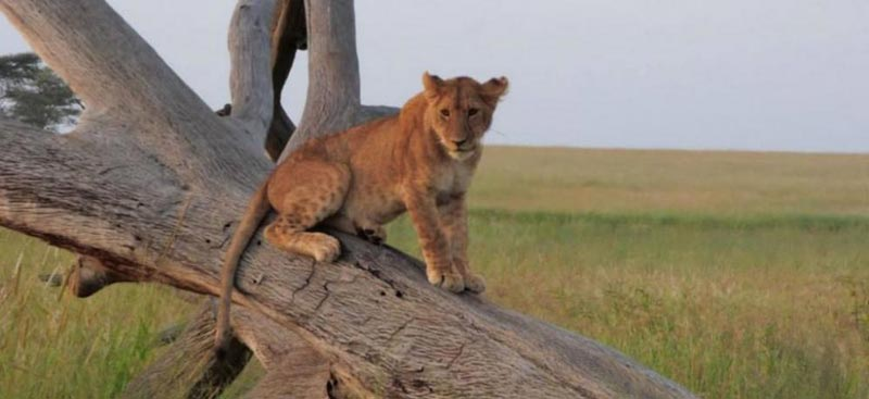 14 Days Combined Kenya, Tanzania And Zanzibar Safari Package