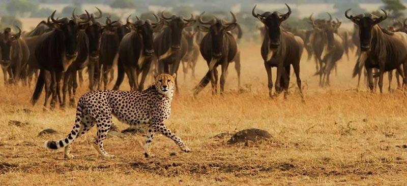11 Days Kenya And Tanzania Safari Plus Mt. Kilimanjaro Package