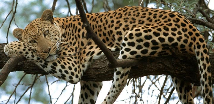 10 Days Kenya And Tanzania Safari Package