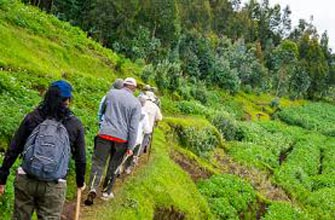 Uganda Gorilla Trek Tour Package