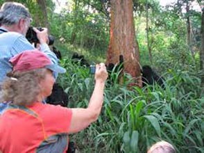 3 Nights/4 Days Uganda Gorilla Trek Tour P_ackage