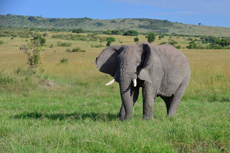 6 Days Kenya And Tanzania Safari Tour