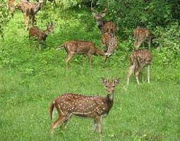 Wildlife Tour Of Chhattisgarh