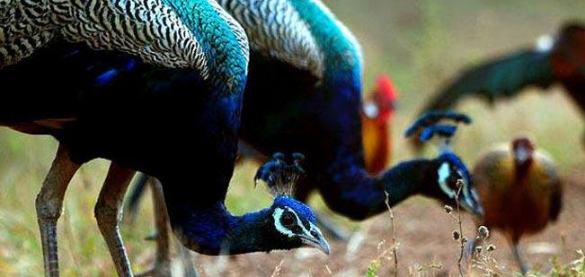 Debrigarh Wildlife Sanctuary Tour