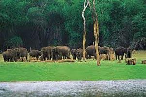 Wildlife Tour Of Chhattisgarh.