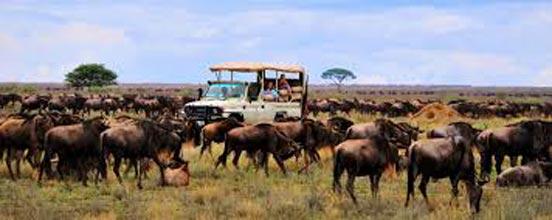 Tanzania Northern Safari 7 Days /6 Nights