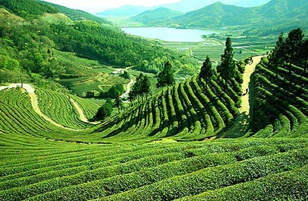 Breath Take Darjeeling Tour