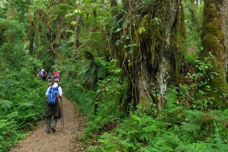 Mount Kilimanjaro - Machame Route Tour