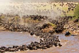Lake Manyara National Park & Ngorongoro Crater & Serengeti National Park