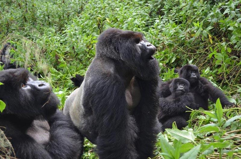 Best Of Uganda 12 Days Classic Safari Tour