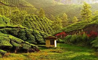Kerala Offbeat Tour