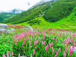 Valley Of Flower Trek Tour