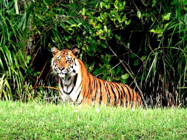 Sundarbans Tiger Tour