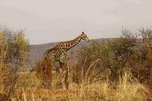 Wild Life Tour In Rajasthan