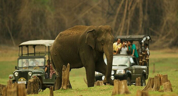 Winter Wonderful Coorg Mysore Tour