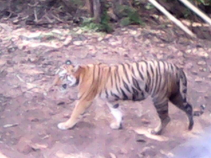 2D/1N Student Tadoba Tour Package