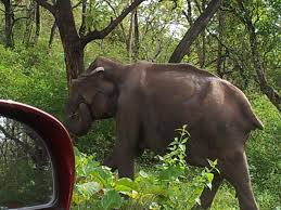 Sawai Madhopur Wild Life Tour - 01Night 02Days By Car