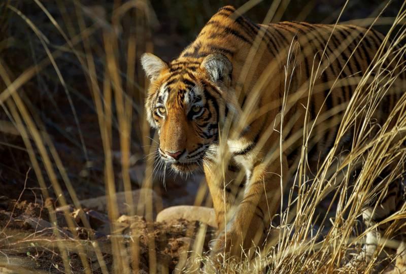 Nationals Parks, Sanctuary And Wildlife Reserve Of Ladakh Tour