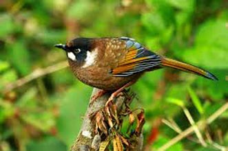 Bird Watching In Bhutan Tour