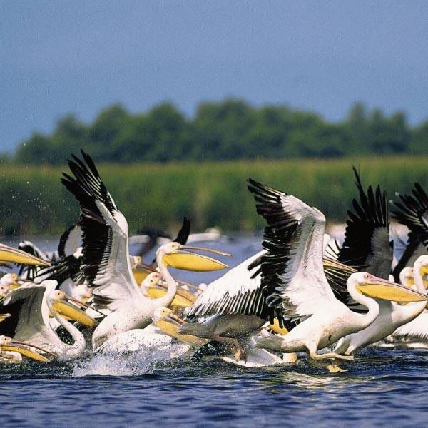 Discover The Danube Delta Tour