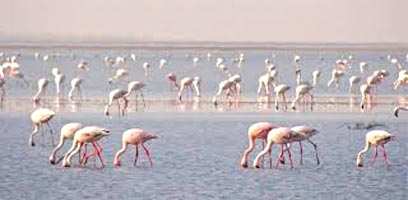 Wilderness In Gujarat Tour