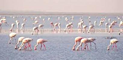 Wilderness In Gujarat Tour