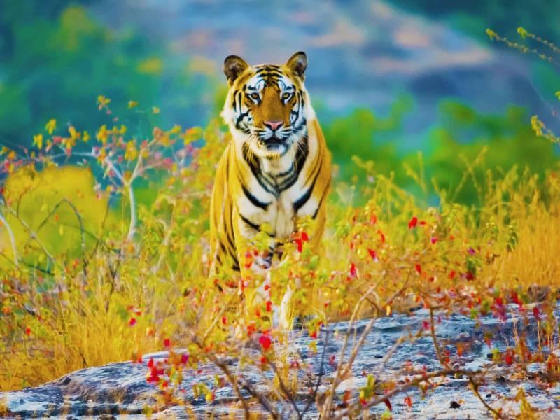 Tiger Tour Of Madhya Pradesh Tour