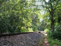 Konark And Jungle Trail Package