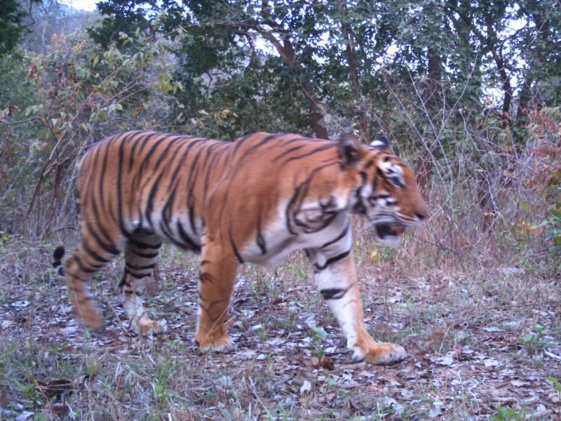 Odisha (Orissa) Wildlife Special Tour