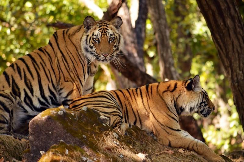 Odisha Wildlife Tours Package