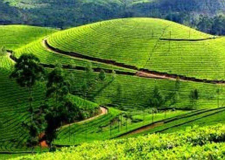 Mysore- Ooty Tour