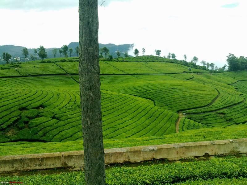 Mysore- Ooty- Coonoor Tour