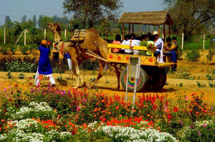 1 Day Tour To Pratap Garh Farms, Jhajjar With Dlx Bus, Breakfast & Lunch