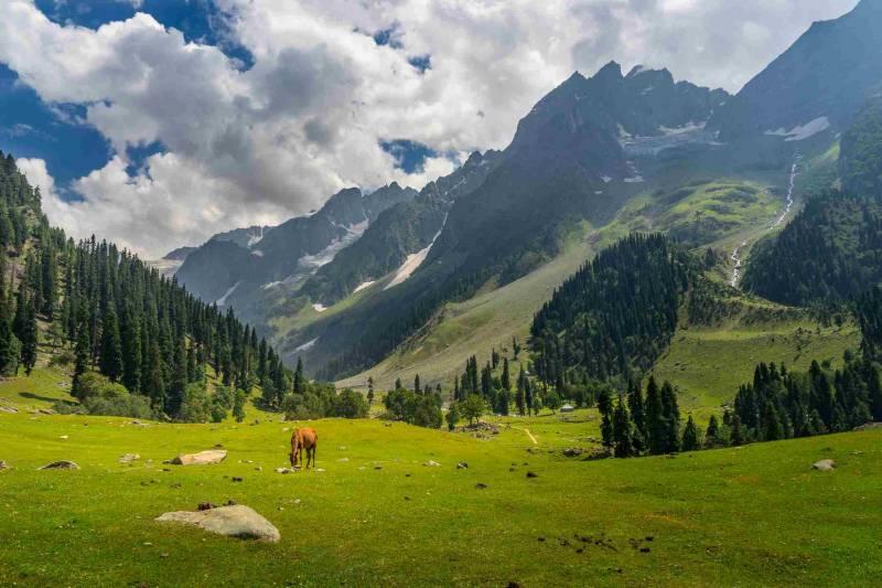 Srinagar, Gulmarg, Pahalgam And Sonamarg 5 Days Tour