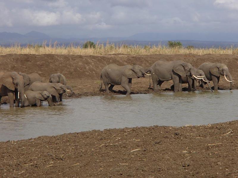 Mid Range Safari Tour