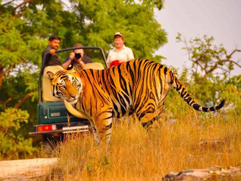Rajasthan Wildlife Tour