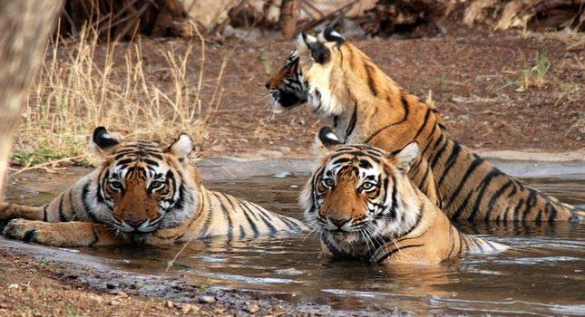 Jaipur & Ranthambore 3* Tour