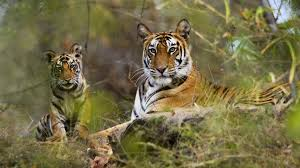 Corbett National Park Tour Package