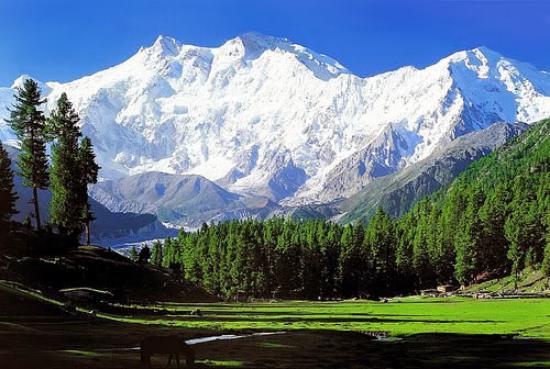 05 Nights & 06 Days Package For Kashmir Srinagar – Pahalgam – Gulmarg – Sonamarg – Srinagar