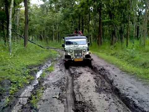 Amazing Kerala Trip: Hills, Backwaters & Safari