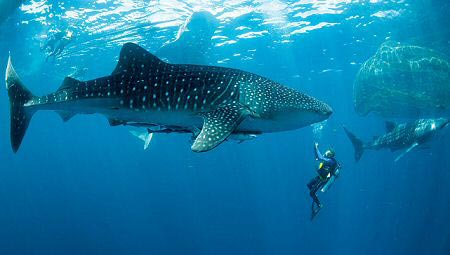 Paradise Maldives Tour