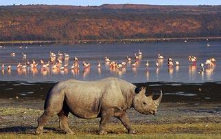 5 Days Maasai Mara-Lake Nakuru-Lake Bogoria-Lake Baringo