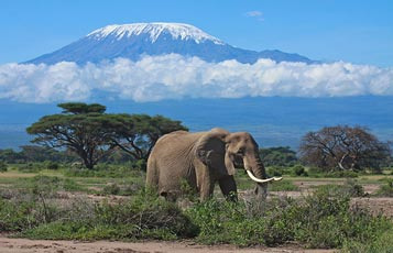 6 Days Maasai Mara - Lake Nakuru - Amboseli National Park Tour