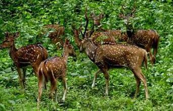 Orissa Wildlife Tour Package