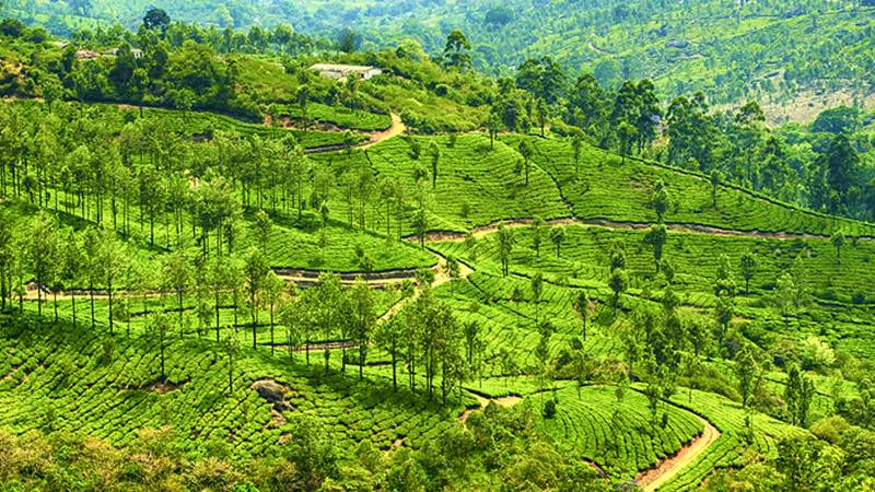 Historical Karnataka With Spectacular Kerala Tour