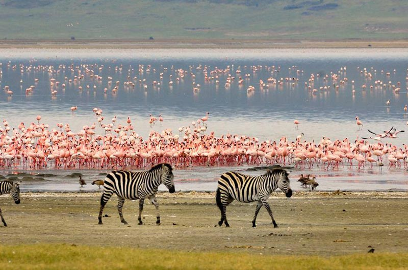 7days Tanzania Wildlife Safari Tour, Tarangire To Lake Manyara
