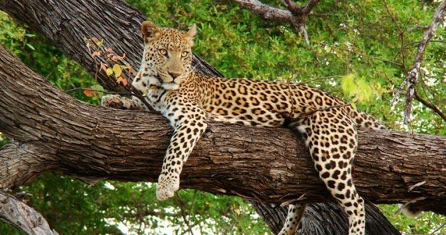 6 Days Serengeti, Ngorongoro, Tarangire And Lake Manyara Tour