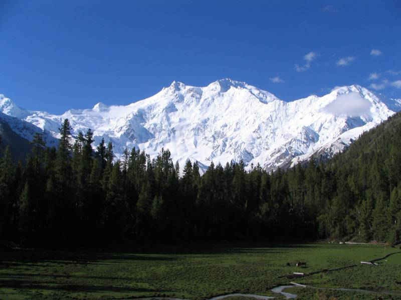 Magic Kashmir : 7 Nights / Days Package Tour