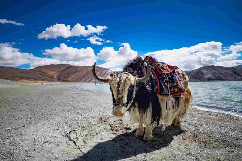 Lakes Of Ladakh Tour