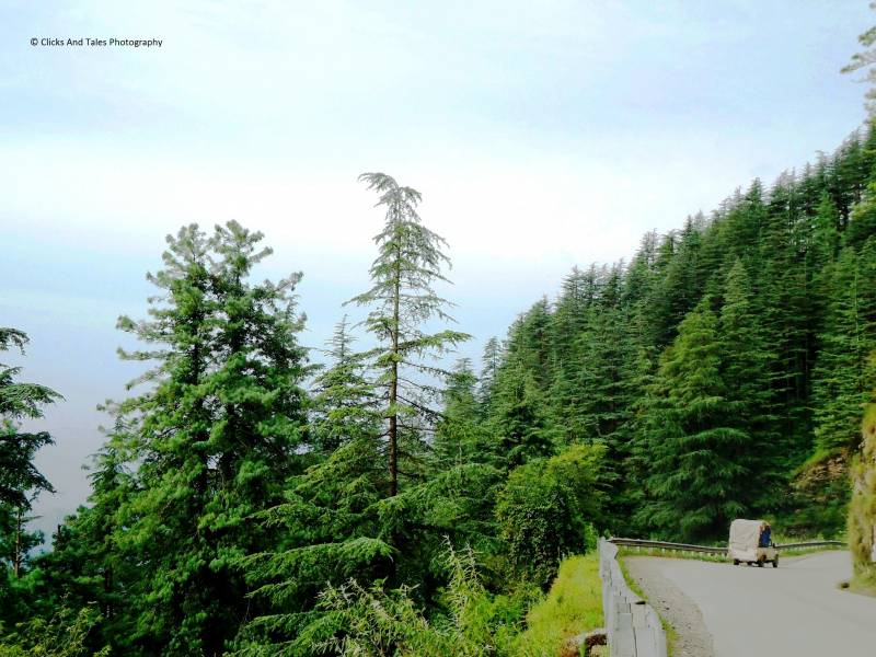 Evergreen Uttarakhand (4n/5d) Tour